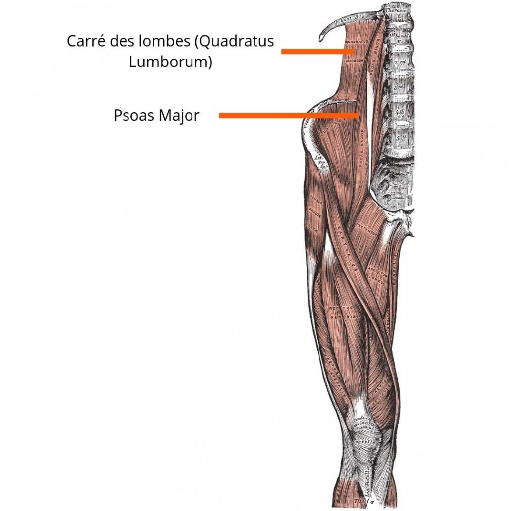 stretchingpro-etirements-carre-des-lombes-quadratus-lumborum)