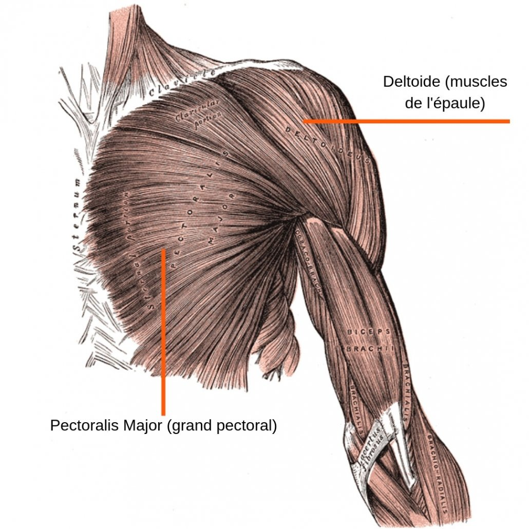 stretchingpro-etirements-epaule-vue-anterieure