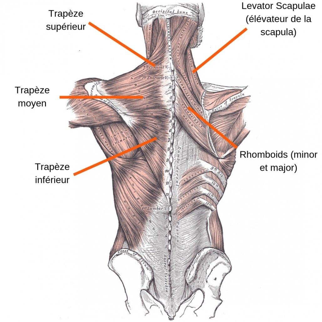 stretchingpro-etirements-trapeze