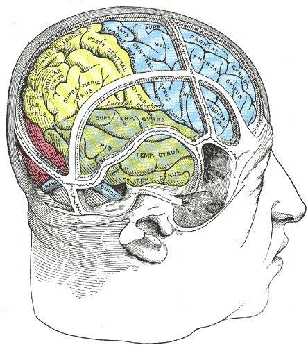 stretchingpro-cerveau