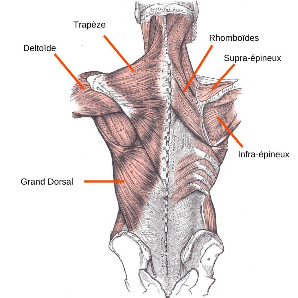 stretchingpro-etirement-epaule-musculation-1