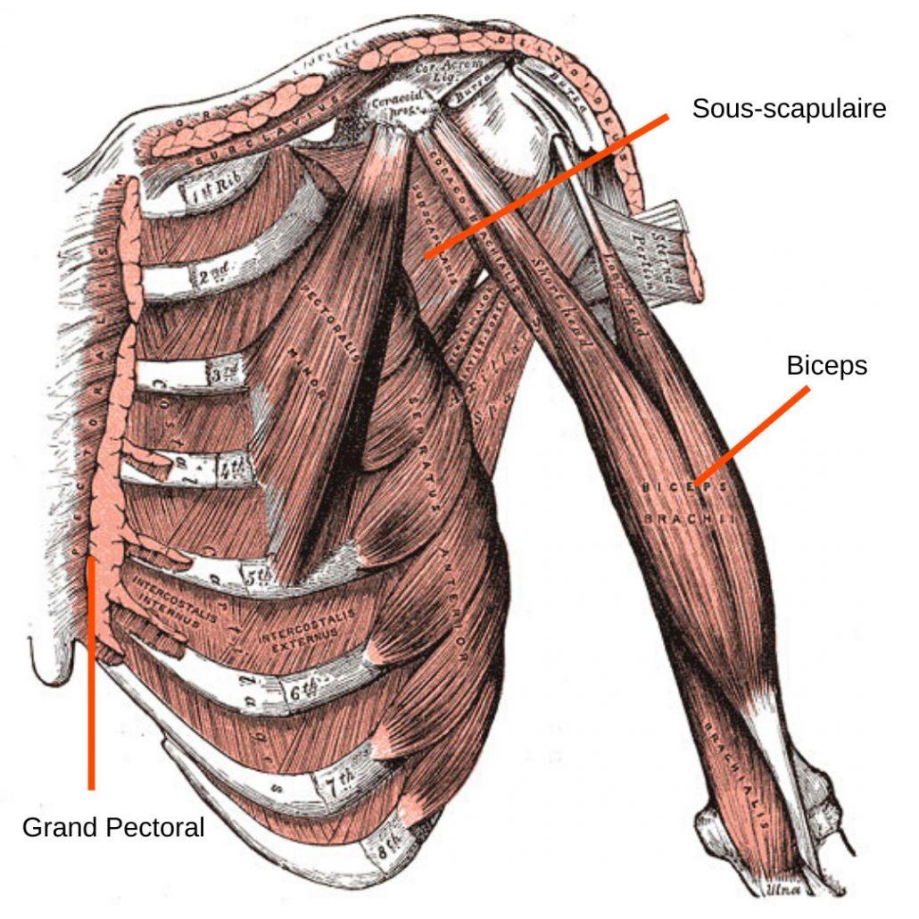 stretchingpro-etirement-epaule-musculation-3